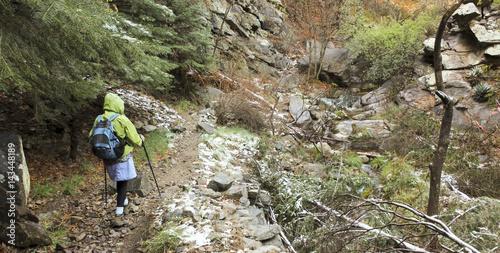 A Woman Hikes Through a Lush Canyon Canvas Print