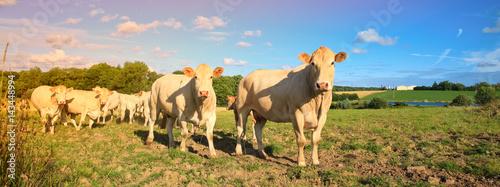 Poster de jardin Vache Vaches à la campagne