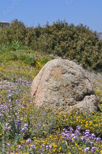 Cuadros en Lienzo Villasimius au printemps, Sardaigne