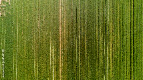 Deurstickers Groene Natura e paesaggio: vista aerea di un campo, campo arato, coltivazione, prato verde, campagna, agricoltura