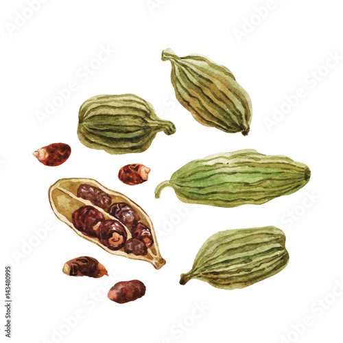 Fototapeta Pods and cardamom seeds. Watercolor. obraz