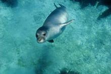 Diving Picture Of Mediterranea...