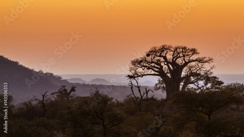 In de dag Baobab Landscape with Baobab in Kruger National park, South Africa