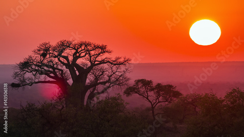 Photo sur Toile Orange eclat Sunrise with baobab in Kruger National park, South Africa