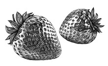 Engrave Isolated Strawberry Hand Drawn Graphic Illustration