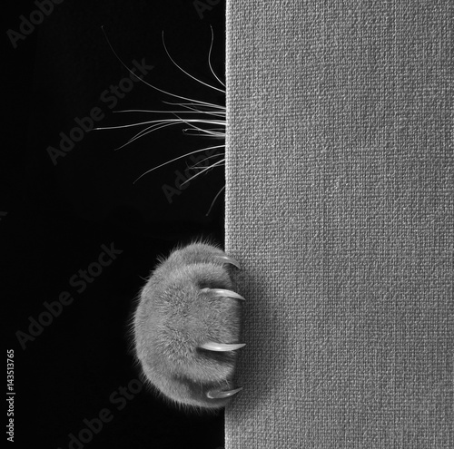 Obraz na płótnie The cat hid behind a big book
