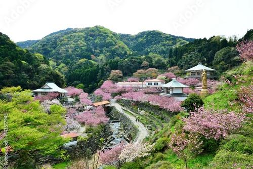 Foto op Plexiglas Groene 一心寺の八重桜