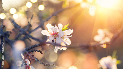 Spring blossom background Canvas Print