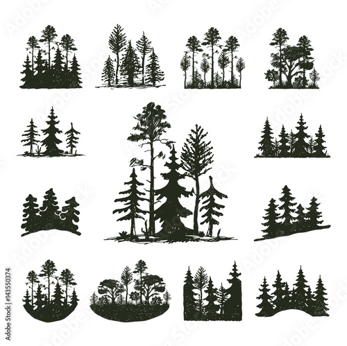 Fotomural Tree outdoor travel black silhouette coniferous natural badge, tops pine spruce branch cedar and plant leaf abstract stem drawing vector illustration