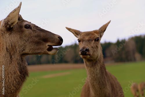 8 Tricky Deer Hunting Regulations