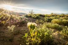 Wildflowers In The Colorado De...