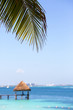 Vacation concept image. Vertical. Palm tree leaves against the turquoise water. Focus point on the leaf. Copy space.