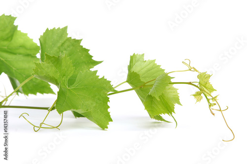 Fotomural Feuilles de vigne
