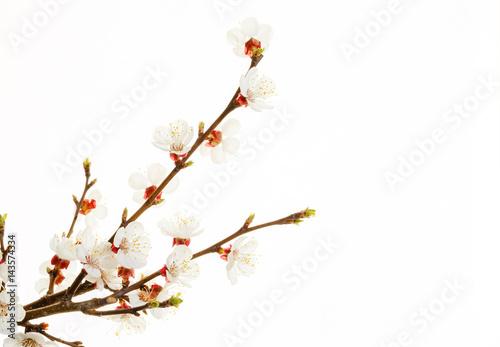 Fotografía branch of almond blossom