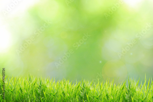 Keuken foto achterwand Lente Spring or summer and nature grass field with sunny background
