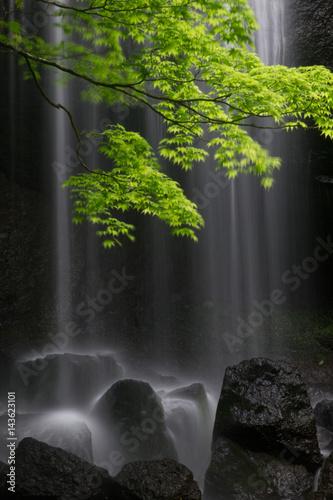 新緑と達沢不動の滝 © 真司 伊藤