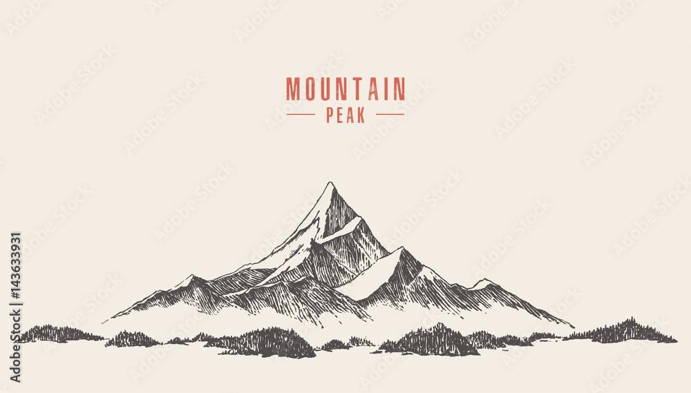 Fototapeta Vector mountain peak pine forest hand drawn