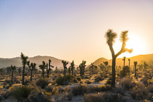 Joshua Tree National Park At S...
