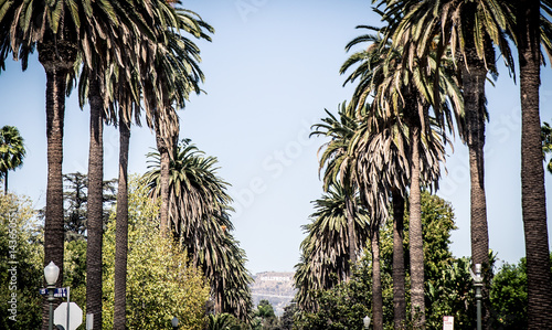 Staande foto Los Angeles Palm trees in Beverly hills