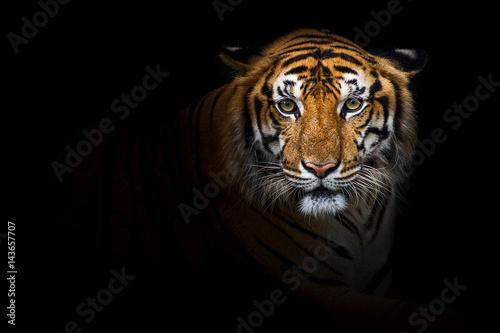 Foto auf Leinwand Tiger Tigers