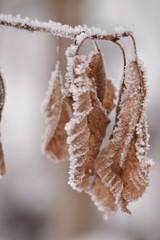 Leaf in winter