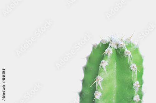 Photo  Cactus isolated on isolated background