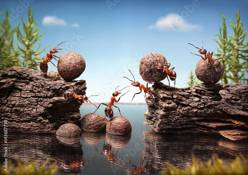 Photo  team of ants work constructing dam, teamwork
