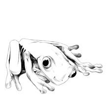 Little Frog Is Sitting, Sketch...