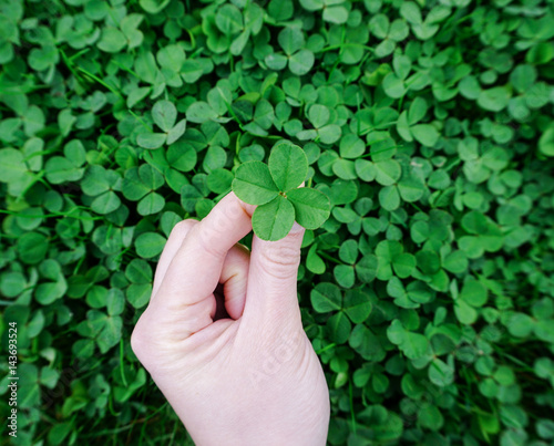 finding a four-leaf clover