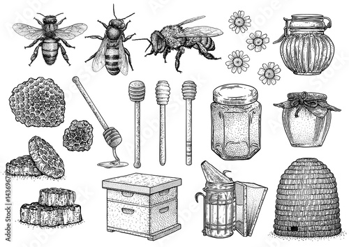 Fotografija Bee, honey, hive, beekeeping illustration, drawing, engraving, line art, vector