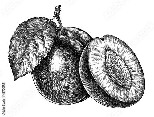 Engrave isolated plum hand drawn graphic illustration Fototapeta