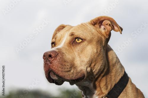 Fotografie, Tablou  Dignified Doggie