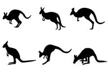 Kangaroo Silhouettes - Vector