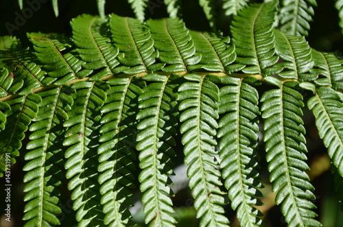 Fotografie, Obraz  Rainfores Garden