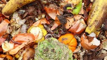 Kitchen Scraps And Red Worms. ...