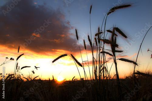 Fototapeta rolnictwo obraz