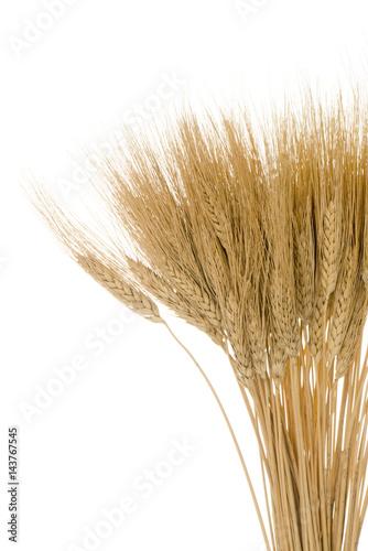 Foto op Canvas Paardebloemen en water Ears of wheat sheaf grain plant crop on white isolated background