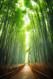 Fototapeta  - Pathway through the bamboo grove Kyoto