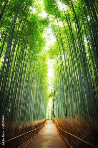 Tuinposter Bamboe Pathway through the bamboo grove Kyoto