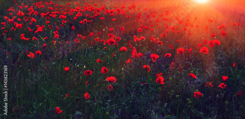 Foto op Canvas Poppy wild flower poppy at sunset