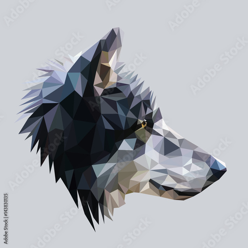 Fototapeta Wolf low poly design. Triangle vector illustration.