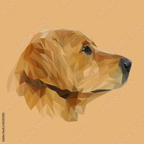 Golden Retriever Dog animal low poly design Fototapeta
