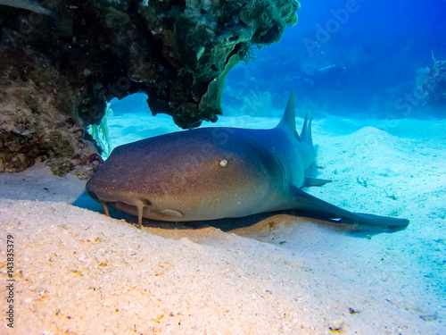 Nurse shark on the sea floor
