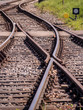 Zugewachsene Gleise