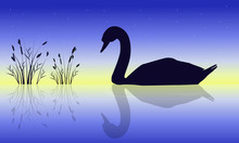Silhouette Of Swan Beauty Natu...