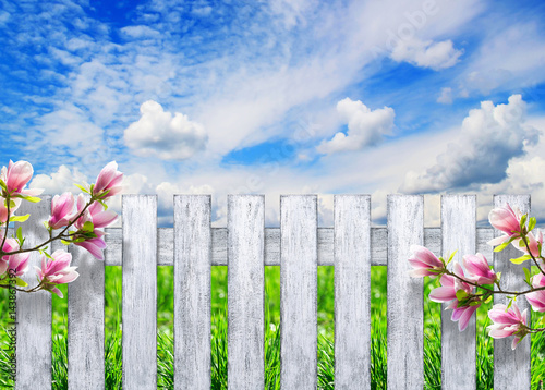Fotografie, Obraz  Fence with magnolia against the sky with clouds and grass