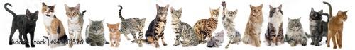 Fototapeta group of cat obraz