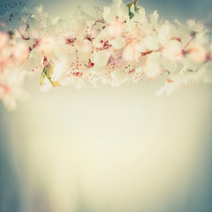 FototapetaClose up of cherry blossom, springtime floral border in pastel color