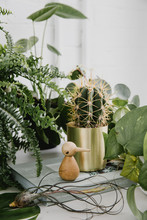 Interior Vignette With Greenery And Book