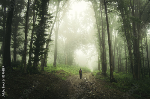 man on magical forest path